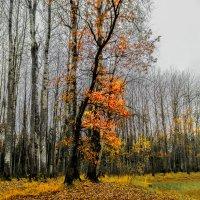 Немножко октября :: Павел