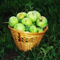Корзинка яблок :: Татьяна Королёва