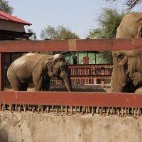 Слоны :: Наташа Федорова