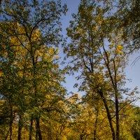 Осенний парк :: Александр Шамов