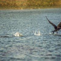 На озере :: Vitalij P
