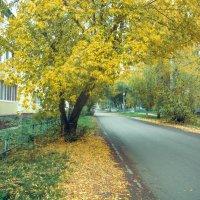 Улица в желтом :: Вячеслав Баширов