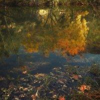 снова осень... :: svabboy photo