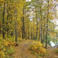 Тропки покрытые листьями :: Лидия (naum.lidiya)