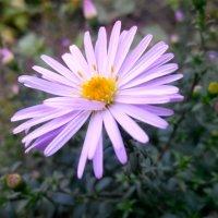 Цветок :: Татьяна Королева