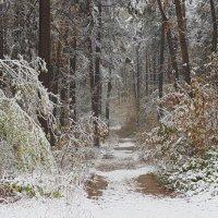 первый снег :: Алексей Карташев