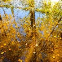 Еще один солнечно-желтый вечер в Вышнем Волочке :: Дмитрий Колесников