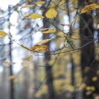 Осень... :: Наталья Щепетнова