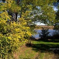 Осень :: Евгения Курицына