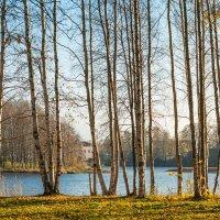 Прозрачная осень 3 :: Виталий
