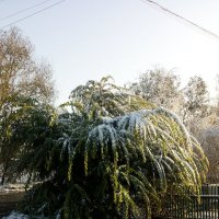 Первый снег :: Алексей Масалов