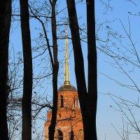 За деревьями :: Canon PowerShot SX510 HS