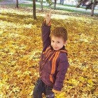 золотая осень. :: Мария Владимирова