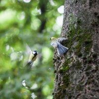 Птички :: Эммль Buturlin