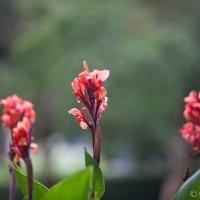 Цветы :: Emil Buturlin