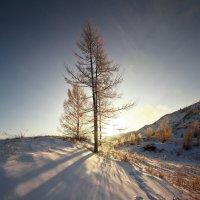На горы зимние, взор Ваш, пусть неутомимым будет 6 :: Сергей Жуков