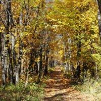 В осеннем лесу :: Лариса Коломиец