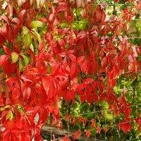 пылает в листьях Осень :: Lena