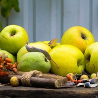Осенние яблоки. :: ния