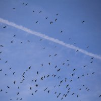 Снова птицы в стаи собираются :: Татьяна Ломтева