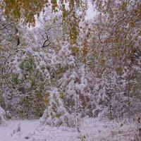 Первый снег---04 :: Владимир Холодный