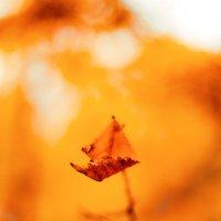 осень так и манит за собой в вечный танец смерти... :: Инна