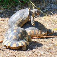 Утехи черепах. :: Оля Богданович