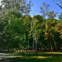 в парке :: Александр Корчемный