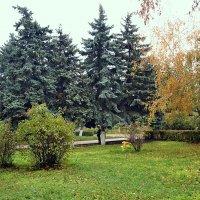 Осенние мотивы :: Владимир Болдырев