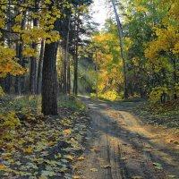 Слушает дорога листопад... :: Лесо-Вед (Баранов)