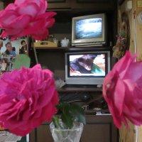 розы в октябре :: Леонид Виноградов