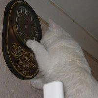 Переведу ка я часы по ближе к обеду... :: Татьяна