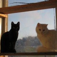Две кошки у окошка :: Татьяна