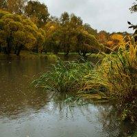 Осенняя песня дождя :: Ирина Климова