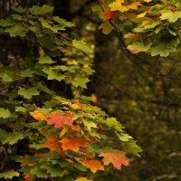 Осенний ноктюрн :: Ирина Климова