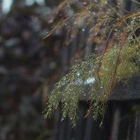 Осень :: Вера Арасланова