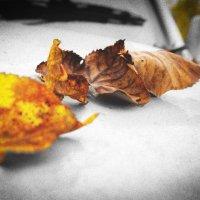 Навеяно осенью... :: Арина