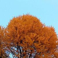Два цвета осени :: Наталья Тимофеева