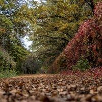 осень :: валерий