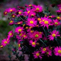 осень в моем саду. :: Валерий Гудков