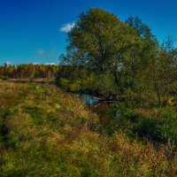 Река Дрезна октябрь 2016 №2 :: Андрей Дворников