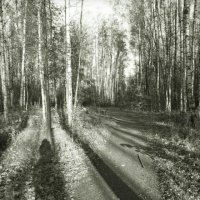 Осень в монохроме :: Taisia_ZX