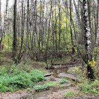 Ручей в осеннем лесу. :: Борис Митрохин