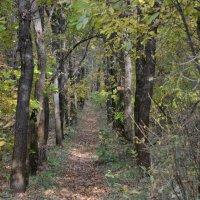 Тропинка в осеннем лесу :: Дмитрий