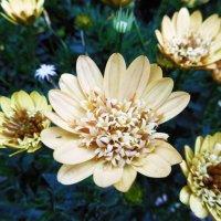 Необыкновеные цветы :: татьяна