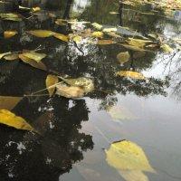 После осеннего дождя :: Татьяна Литвинова