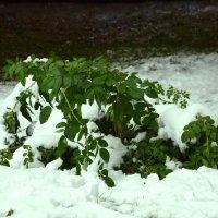 Первый снег :: Bort037