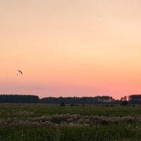 Пролетая над лугами. :: Андрий Майковский