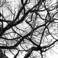 И с дубов облетает листва... :: Владимир Голиков
