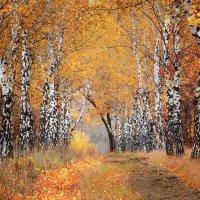 Янтарь осени :: Cергей Дмитриев